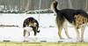 puppy pair, maddie_00004