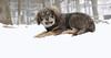 Grizzly (3 5 mo  boy)_00009
