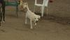 leila (puppy)_002