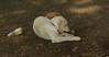 leila (puppy)_001