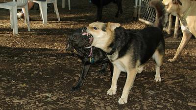 Artimis (puppy), Maddie_001