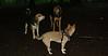 foxi, maddie, sammy_004