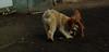 Cleo (puppy), Hank (pup)_001