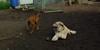 Cleo (puppy), Hank (pup)_002