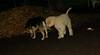 ruby (puppy), Maddie_001