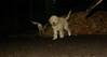 ruby (puppy), Maddie_002