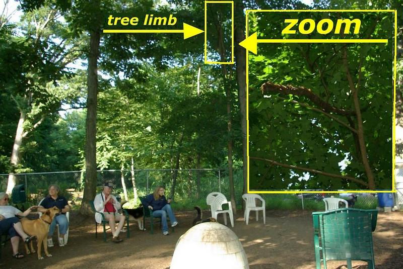 dangling tree limb graphic