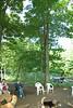dangling tree limb_00001