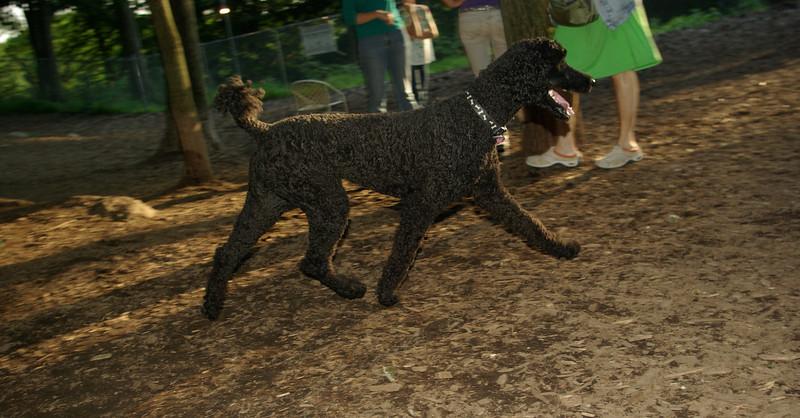 ZOE (visit black poodle)_00006