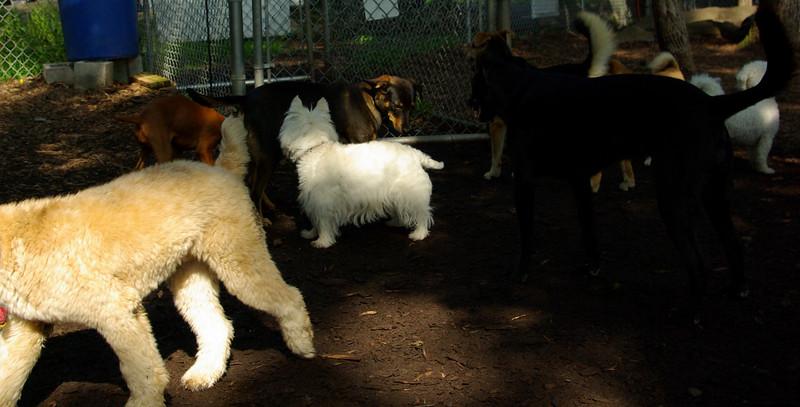 Oscar ( 5 mo  boy pup, )_00001