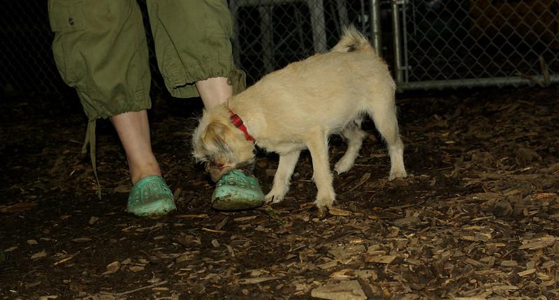 Jojo (foster puppy) 6