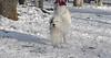 Petey (tibetan terrier)_00001