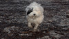 Petey (pup)_00005