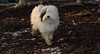 Petey (pup)_00004