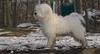 Petey (pup)_00003
