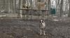 Gussy (puppy), Lucy (PB), Maddie_00002