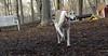 Chase (greyhound)_00002