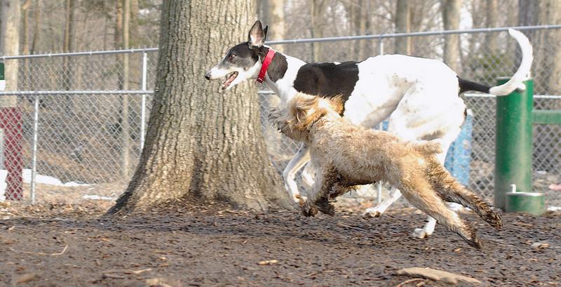Hank (pup), Knightly_00001