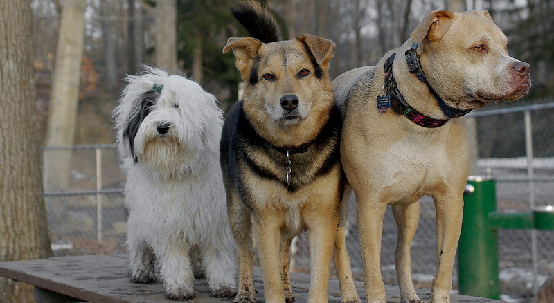 Lucy, Maddie, Petey_00003