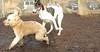 Hank (pup), Knightly_00002