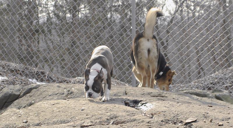 Gussy ( puppy 5 mo ), Maddie_00002