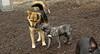 puppy & Maddie_00001