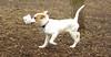 Belle (puppy)_00001