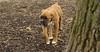RUBY 3 (puppy)_00002