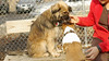puppies, small dogs_00021