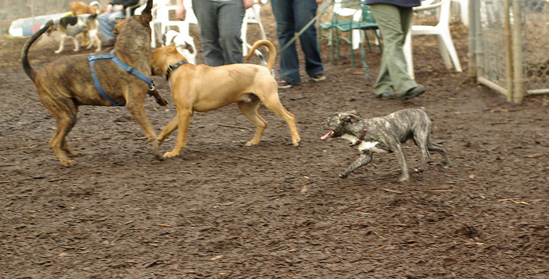 puppies, small dogs_00006