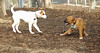 puppies, small dogs_00031
