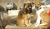 puppies, small dogs_00022