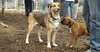 puppies, small dogs_00007