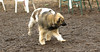puppies, small dogs_00008