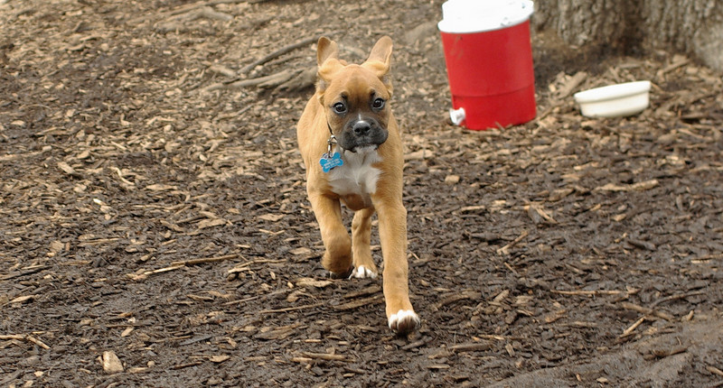 puppies, small dogs_00003