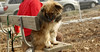 puppies, small dogs_00020
