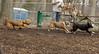puppies, small dogs_00034