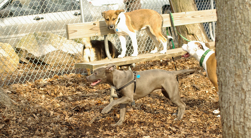 puppies, small dogs_00017