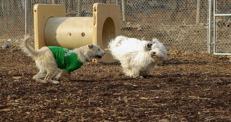 Max (girl), Petey (pup )_00003