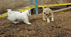 Hank (pup), Petey (pup)_00001
