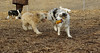 Nicky ( new girl), Hank (pup)_00003