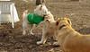 Hank (pup), Max (girl)_00002