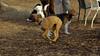 Ruby 3 (new puppy)_00001