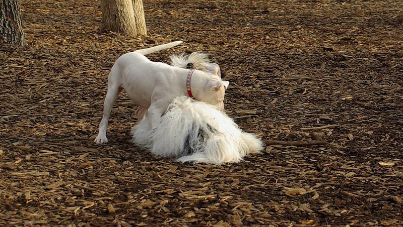 Bella (new), Petey (pup)_00002
