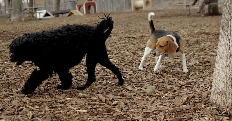 Beagle (kobe), Storm_00001