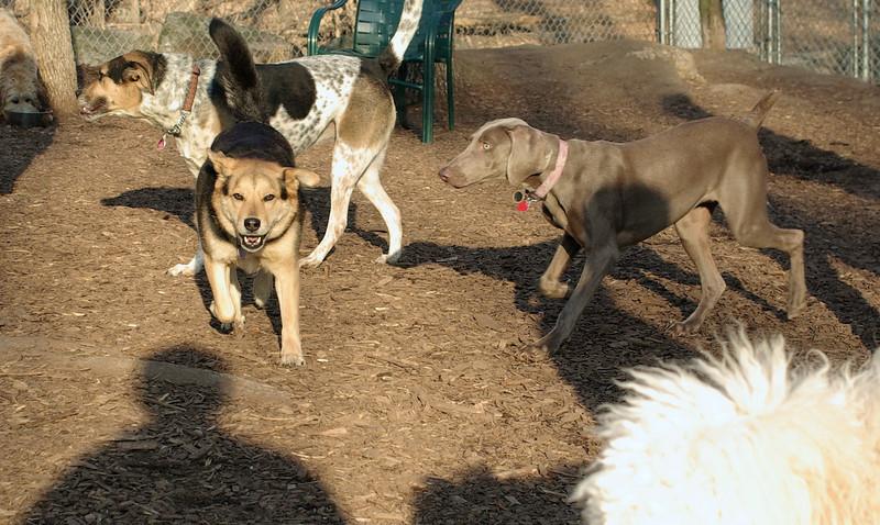 Skye, Maddie, Cali_00001