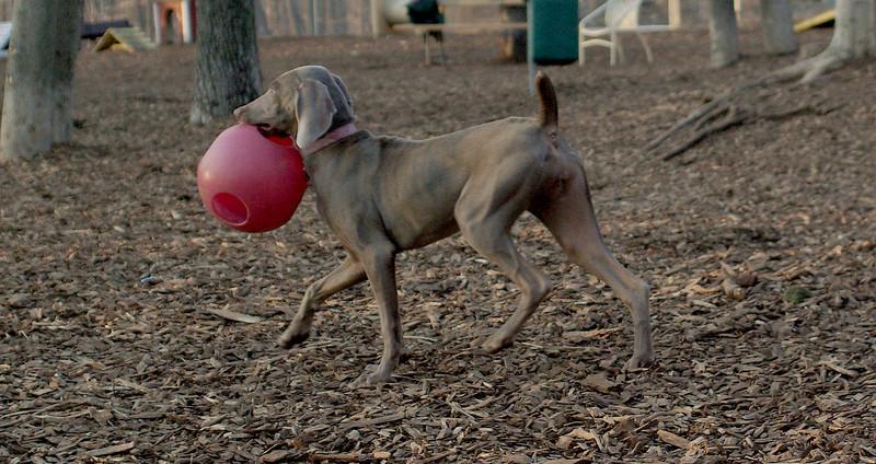 SKYE (W) (girl pup)_00002