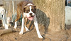 SPIKE (new boxer)_00007