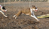 Spike (boxer), Knightly (GH)_00004
