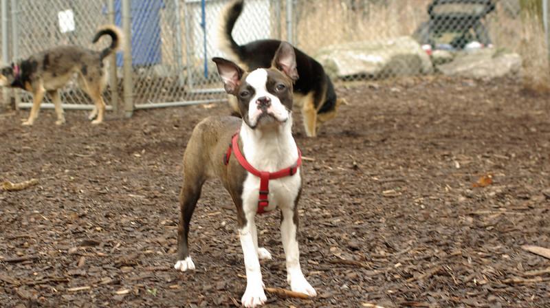 Gussy ( puppy girl)_00001